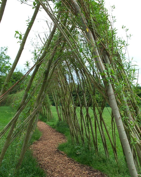 Pillared Living Willow Tunnel