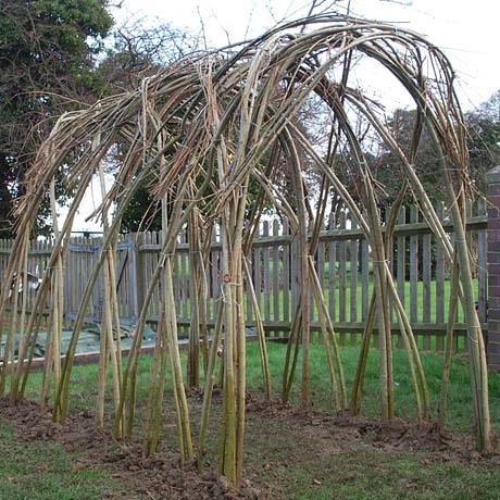 Small Living Willow Tunnel