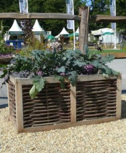 Double Oak and Hazel Planter
