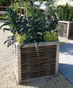 Large Oak and Hazel Planter